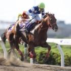 『【浦和・さきたま杯結果】8歳馬ノボバカラが差し切り3年半ぶりの重賞V』の画像