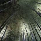 『京都 高台寺のプロジェクションマッピング&ライトアップ~5//6まで!』の画像