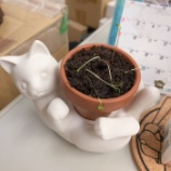 『豆を育てよう』の画像