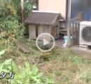 「ほえ声がうるさくて頭にきた」 隣人の犬をバットでブン殴ったパートの男(42)を逮捕 栃木・宇都宮