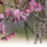 『香散見草』の画像