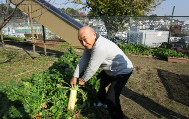 『ザッ、収穫!! できも上々。』の画像