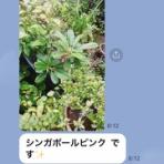 ゆるゆる石田さんチ日記