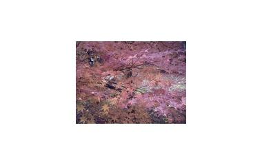『東福寺(京都市東山区)』の画像