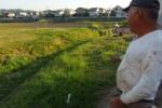 交野が原で田植えが始まりました!~秋にはゴールデンになるのでしょう~