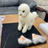 『羊毛フェルト教室&ラーメン屋「王ちゃん」』の画像