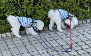 「アニキと元気にお散歩」