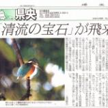 『戸田市後谷公園にカワセミ出現!』の画像