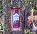 【動画】斬新な木の倒し方が話題に