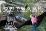 交野の屋久島風スポットに行ってみた!〜星田六十名山をめぐる〜