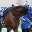 イーグルフェザー(19/10/06・グリーンチャンネルカップ・東京競馬場)