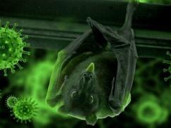 日本さん、コウモリからとんでもないウイルスを発見してしまう・・・