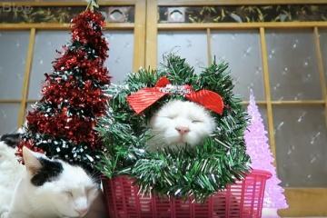 のせネコたちのまったりクリスマス。メリークリスマス!