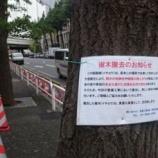 『「愚者は木を伐る、賢者は木を残す」オリンピックのため樹木たちを伐採』の画像