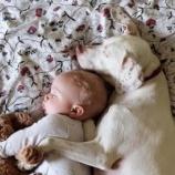『赤ちゃんだけを信頼するわんこ』の画像