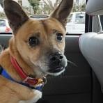 保護犬〜杜(もり)と、障害犬〜檍(おき)、               の気まぐれ日記