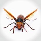 【悲報】大物YouTube、スズメバチに刺されて緊急入院wwwwwww