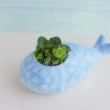 『夏っぽい植木鉢買いました!』の画像