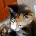 保護した子猫に「ハンドスピナー」を見せてみた → ちょっと気に入ったようです…