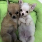 ペットショップワンラブ 佐賀県 ゆめタウン武雄店のスタッフブログ~子犬子猫やトリミングカットをご紹介してるよ