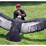 アパートで飼える最大の鳥ってなんだろうか?