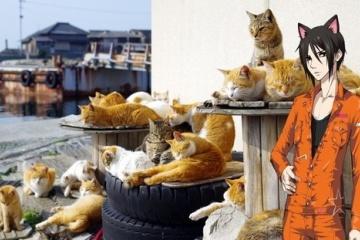 海外「日本に引っ越すわ」日本にかわいすぎる動物スポットが多すぎて思考がおかしくなる海外の人々