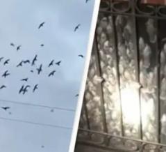 またしてもリアル・ヒッチコック!千羽もの渡り鳥が民家の煙突に一斉に急降下(アメリカ)