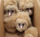 【画像】中国でサルに似た鳥が発見される