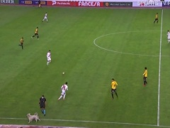 【動画】イッヌ、サッカーの試合中に乱入して選手のスパイクを奪うw