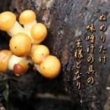 『味噌汁の王』の画像