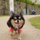 『いつもの公園散歩をVlogにしてみました☆』の画像
