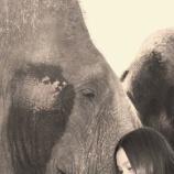 『静かに地球上から消えゆくベトナムのゾウ』の画像