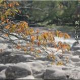 『里の川』の画像