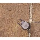 『眠るコウモリ』の画像