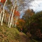 『広島 県民の森 紅葉(黄葉)』の画像