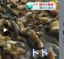 【NHK】突如あらわれたトドロキの光景