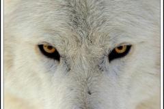 オオカミの群れと遭遇。 逃げる →あなたは死にました。 ヘヴィメタルを聴かせる →せいかい。