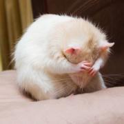 ミッキーじゃなくたって!リアルなネズミもこんなにかわいい