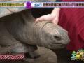 【悲報】女子アナが亀の頭しこしこしてフルボッキの放送事故wwwww(画像あり)