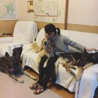 石田ゆり子「犬まみれ」な写真をアップ!「幸せそう」「うらやましい」の声