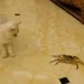【子ネコ】 床に生きているカニがいた。こいつはなんだぁ!? → 子猫、舞う…