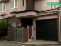 NHK「志村けんさんの自宅はフリー素材です、献花し放題」