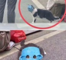 新型コロナ、「ネコ同士」でも感染拡大