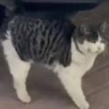 ネコが足踏みをしていた。トイレに行きたいの? 地面が冷たいの? → 猫はさっきからこんな感じ…