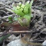 『春の便り』の画像