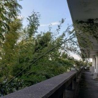 ブログ白南風(しろはえ)星槎湘南大磯キャンパス seisa