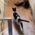 【ネコ】 玄関の郵便受けに何か届いたようだ。待ってました~♪ → うちの猫はこうなります…