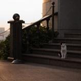 『横浜』の画像