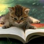 普段はラノベとかちょっとしたSFとか読んでたんだけど、背伸びして難しそうな小説買ってみたらさっぱりわけわからなくて読めない…