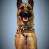 『炎天下で救助活動していた警察犬アミーゴの死』の画像